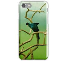 Bird in Painted Cage, Bronx Zoo iPhone Case/Skin
