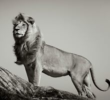 THE LION KING by Dennys Ilic by Filmart