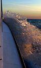 Splash by Marcia Rubin