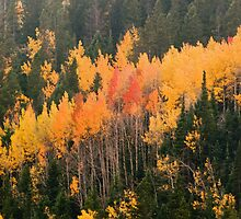 A Colorado Fall by John  De Bord Photography