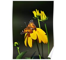 American Lady on Coneflower Poster