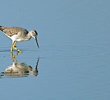 Lesser Yellowlegs Sandpiper  by Monte Morton