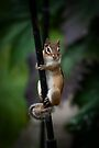 Hanging In by Charles Plant