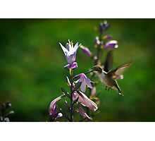 Garden Visitor Photographic Print