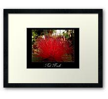 Red brush flower Framed Print