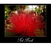 Red brush flower Photographic Print