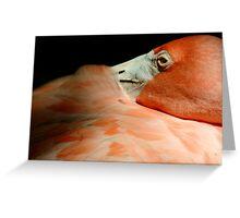 Flamingo at Jungle Gardens IV Greeting Card