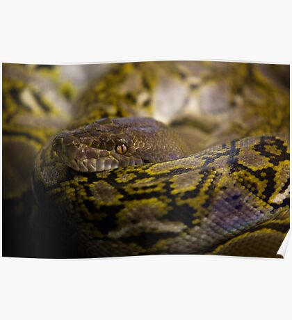 Coiled Poster