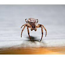 Orb-weaver spider. Photographic Print