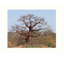 Redwine Baobab Art Print