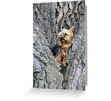 Playing in the Park Greeting Card