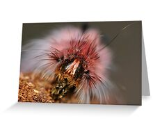 Whos Face Greeting Card