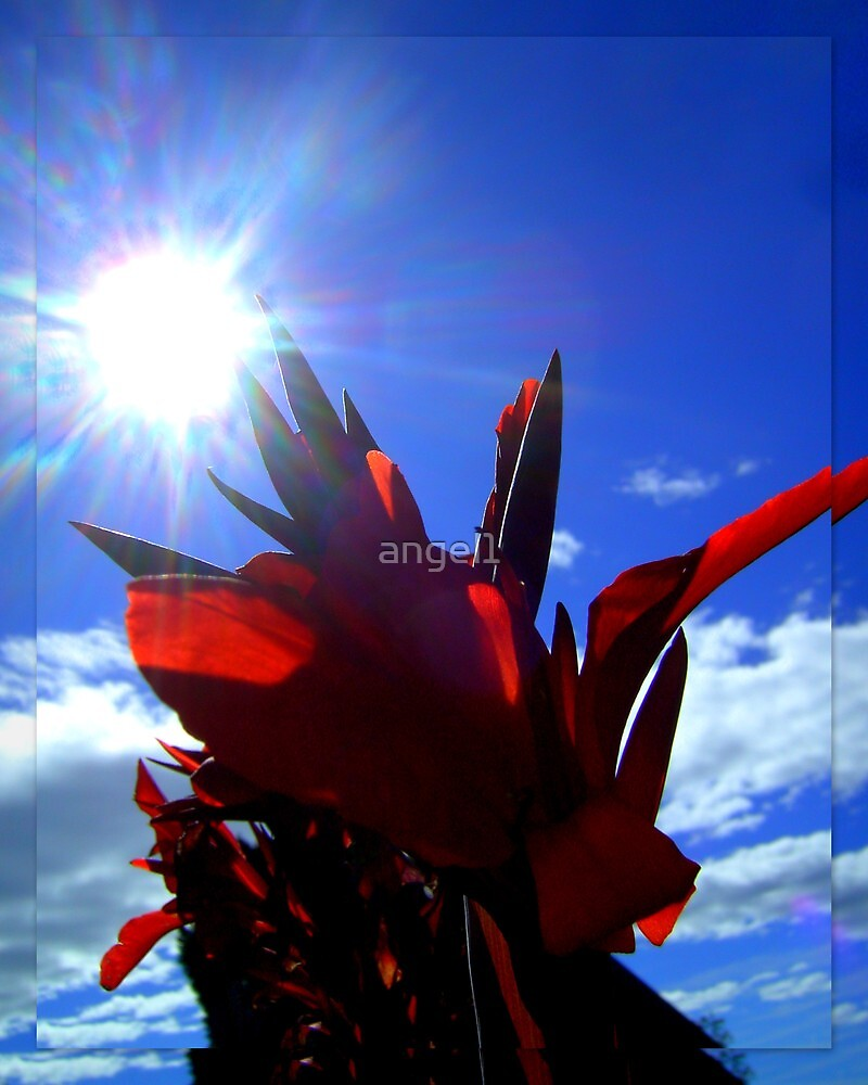 Abstract Flower against Blue Bavarian Sky by ©The Creative  Minds