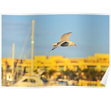 Sea gull at sunset Poster