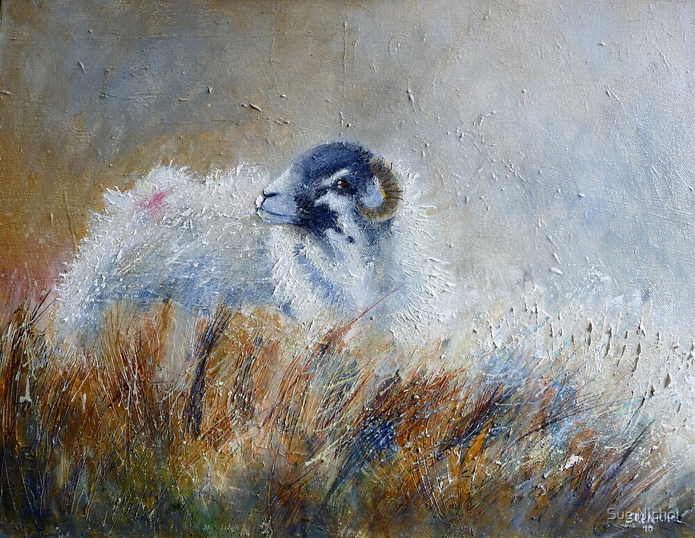 Swaledale Sheep in Soft Autumn Light by Sue Nichol