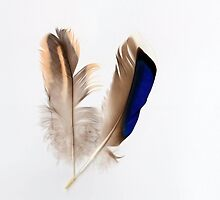 Duck feathers by missmoneypenny