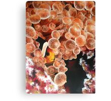 Clownfish Hiding Canvas Print