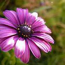 purple&green by Aaron Baker