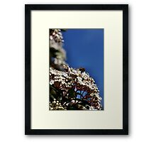 So much to feast on. Framed Print