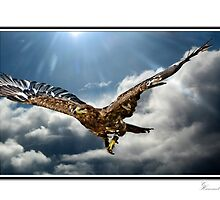 Majestic Flight by ©FoxfireGallery / FloorOne Photography