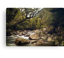 Forest Stream - Fiordland National Park Canvas Print