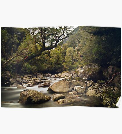 Forest Stream - Fiordland National Park Poster