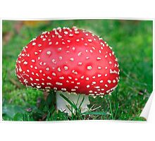 Fly Agaric. Poster