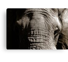 Kruger National Park, South Africa. 2009  III Canvas Print