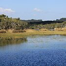 Spring Coming to the Estuary by byronbackyard