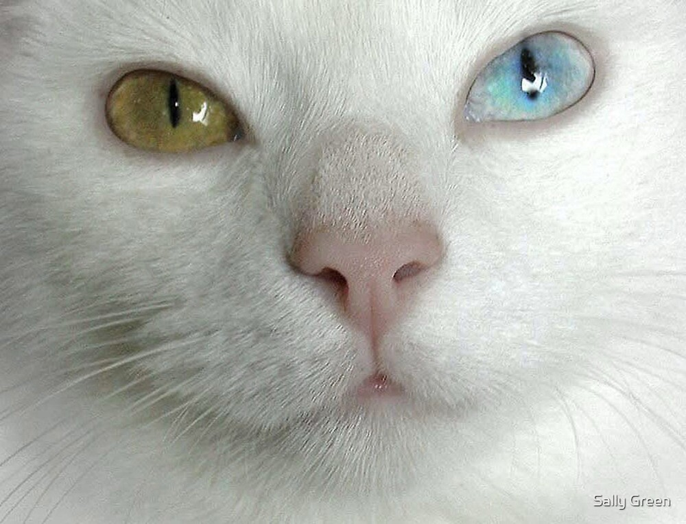 Eyes by Sally Green