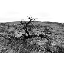 Out of the Earth Photographic Print