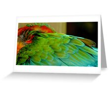 Macaw at Jungle Gardens III Greeting Card