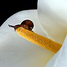 Baby Snail by Mary Broome