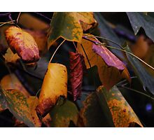 Change of Seasons Photographic Print