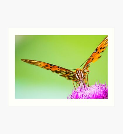 Perched on the Flower Art Print