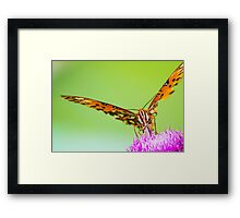 Perched on the Flower Framed Print