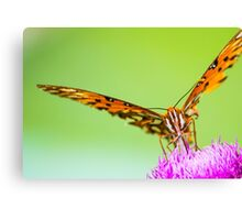 Perched on the Flower Canvas Print