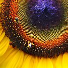 Sunflower, Seeds &amp; Bees by Laurie Minor