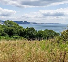 Southwest Coastal Path Above Lyme Regis 2 - July by Susie Peek