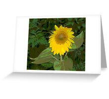 The Magical Perception of a Sunflower Greeting Card
