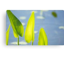 Calm Days Canvas Print