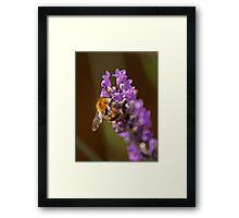 Pollen Junky Framed Print