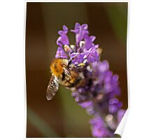 Pollen Junky Poster