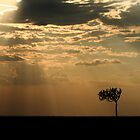 Sunset Over Masai Mara, Kenya II by Damienne Bingham
