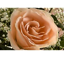 Mom's Rose Photographic Print
