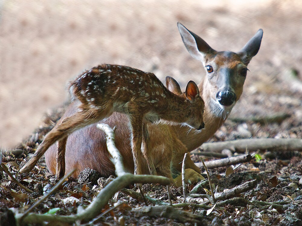 Mother and New Born by Photography by TJ Baccari