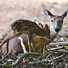 Mother and New Born by TJ Baccari Photography