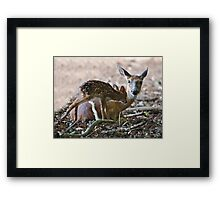 Mother and New Born Framed Print