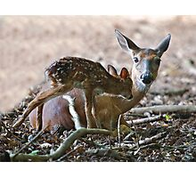 Mother and New Born Photographic Print