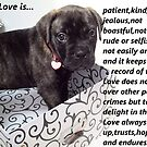 True Love 3 Puppy by Dawnsuzanne